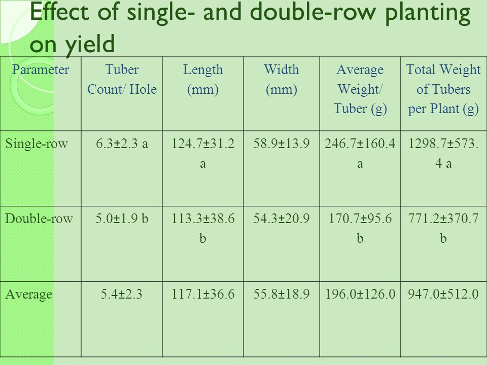 Effect of single- and double-row planting on yield