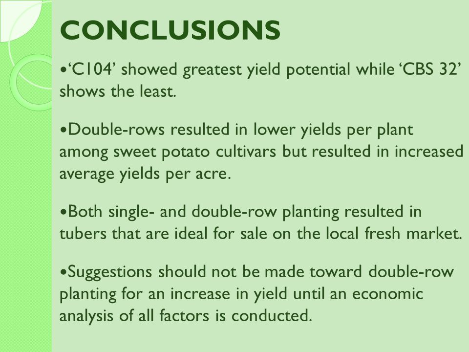 CONCLUSIONS 'C104' showed greatest yield potential while 'CBS 32' shows the least.