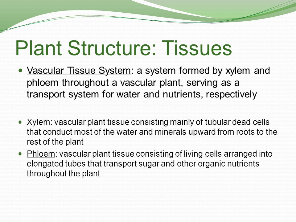 Plant Structure: Tissues