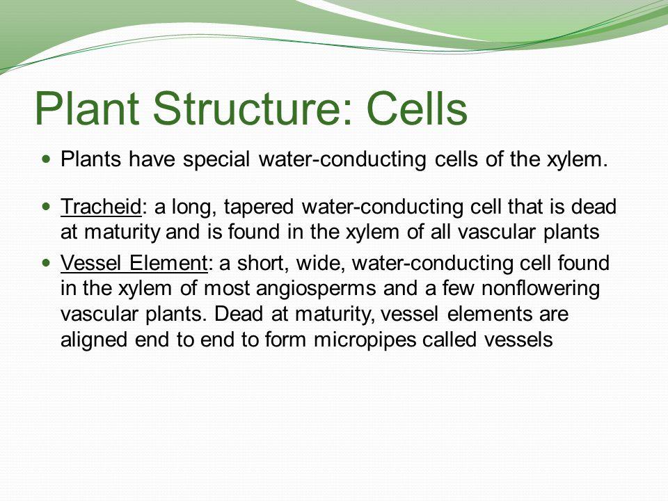 Plant Structure: Cells