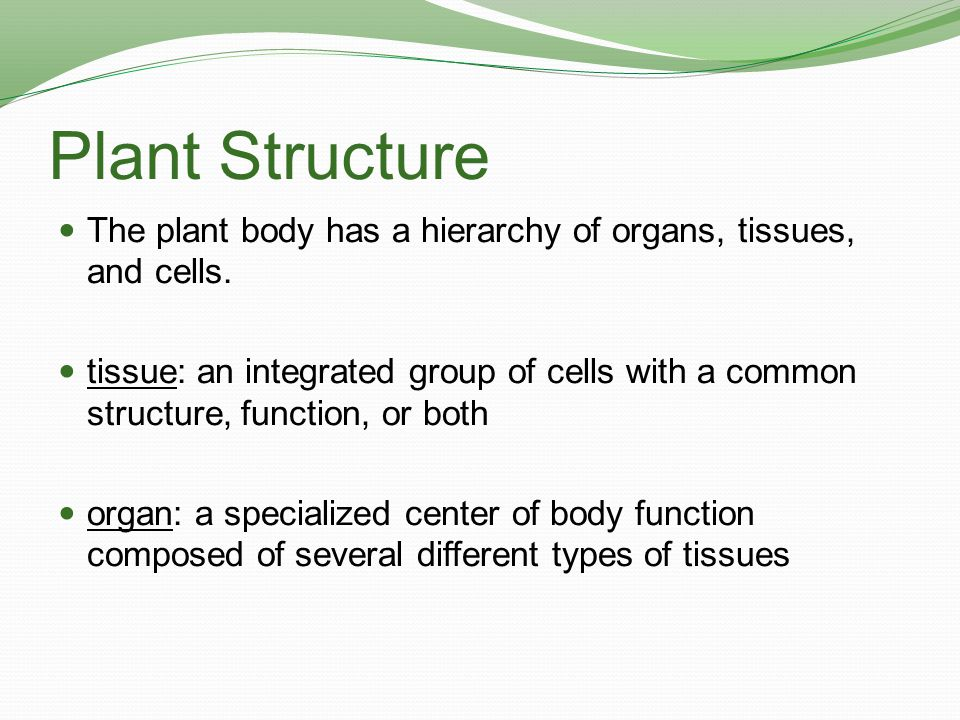 Plant Structure The plant body has a hierarchy of organs, tissues, and cells.