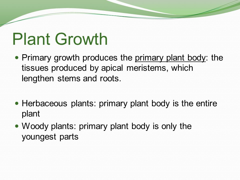 Plant Growth Primary growth produces the primary plant body: the tissues produced by apical meristems, which lengthen stems and roots.