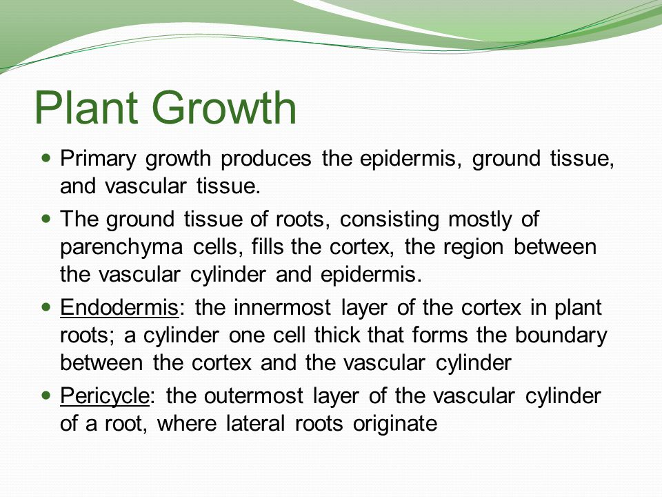 Plant Growth Primary growth produces the epidermis, ground tissue, and vascular tissue.