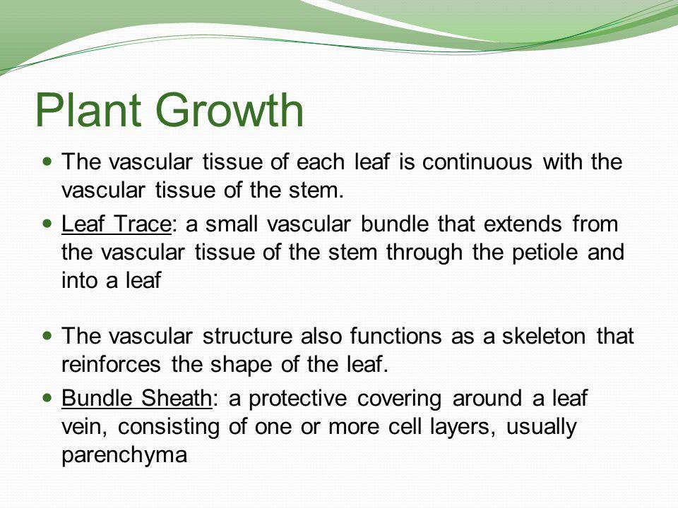 Plant Growth The vascular tissue of each leaf is continuous with the vascular tissue of the stem.