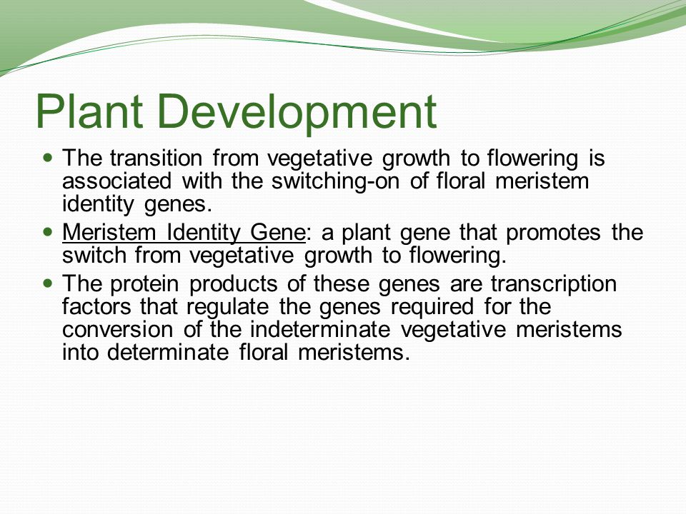 Plant Development The transition from vegetative growth to flowering is associated with the switching-on of floral meristem identity genes.