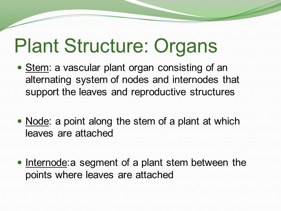Plant Structure: Organs