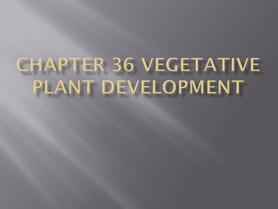 Chapter 36 Vegetative plant development