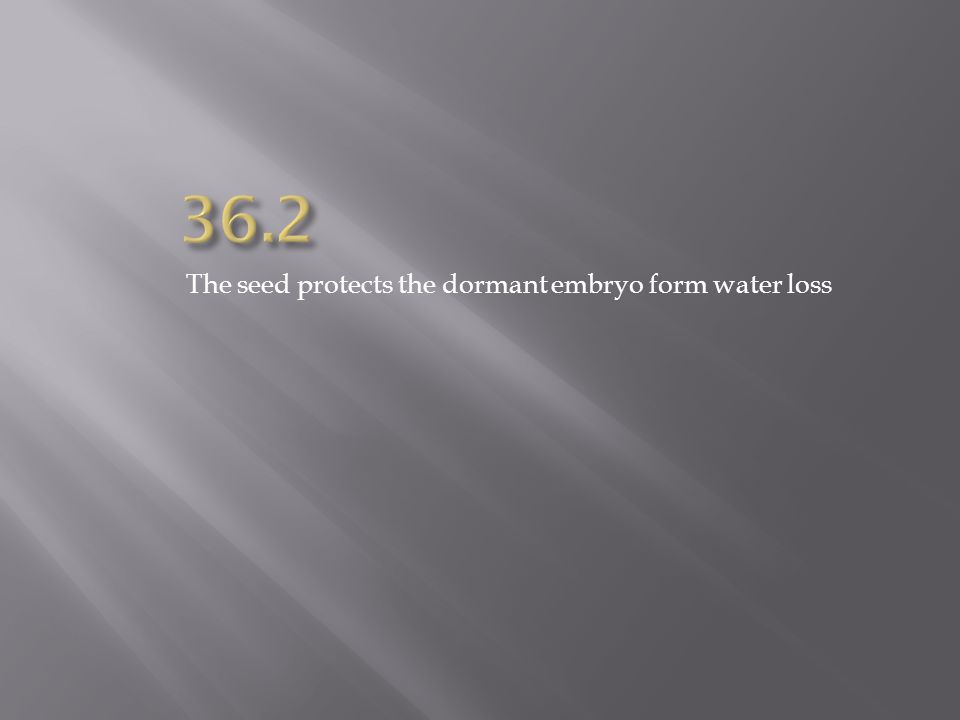 36.2 The seed protects the dormant embryo form water loss