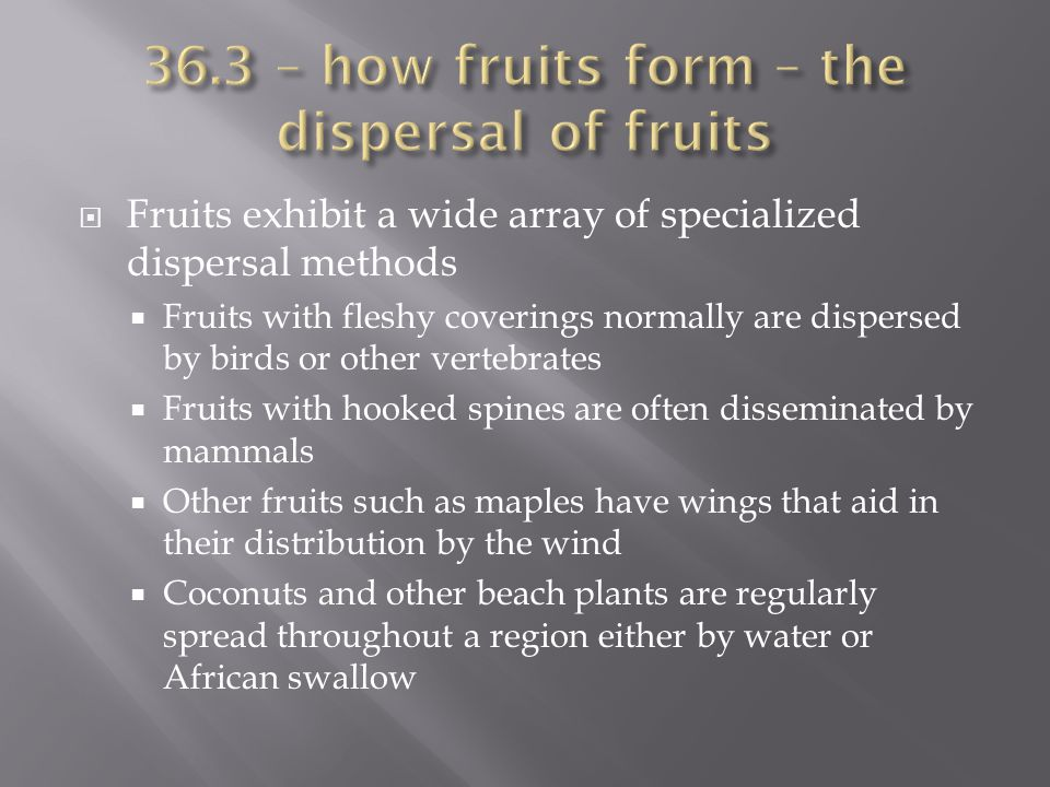 36.3 – how fruits form – the dispersal of fruits