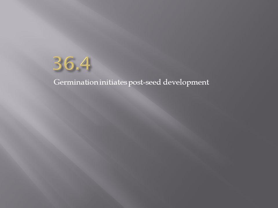 36.4 Germination initiates post-seed development