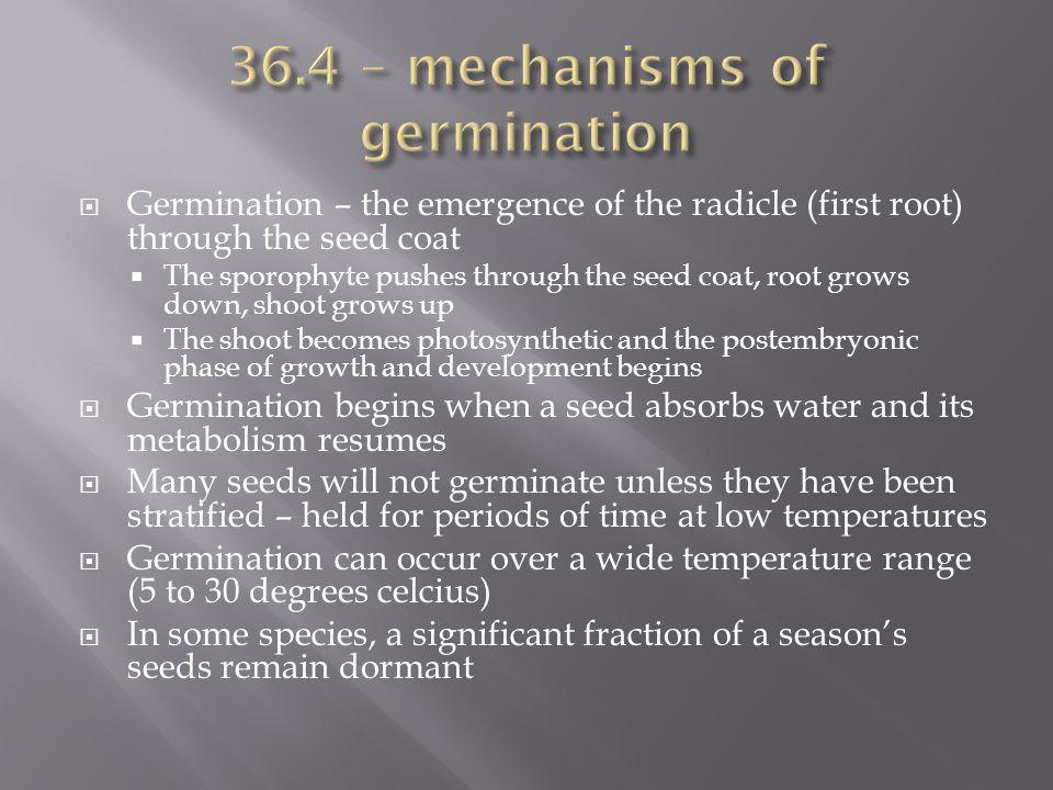 36.4 – mechanisms of germination
