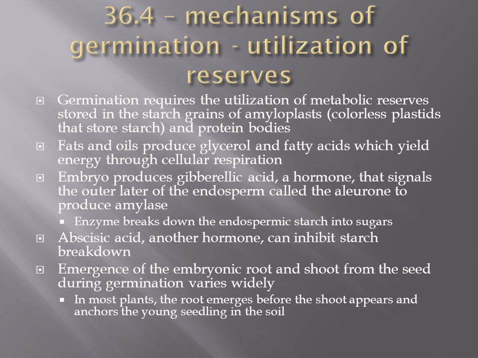 36.4 – mechanisms of germination - utilization of reserves