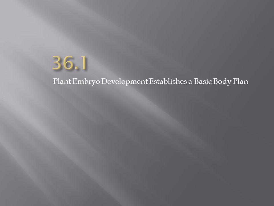 36.1 Plant Embryo Development Establishes a Basic Body Plan