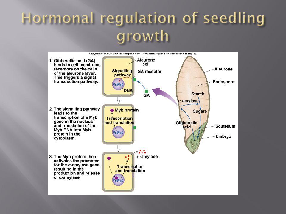 Hormonal regulation of seedling growth