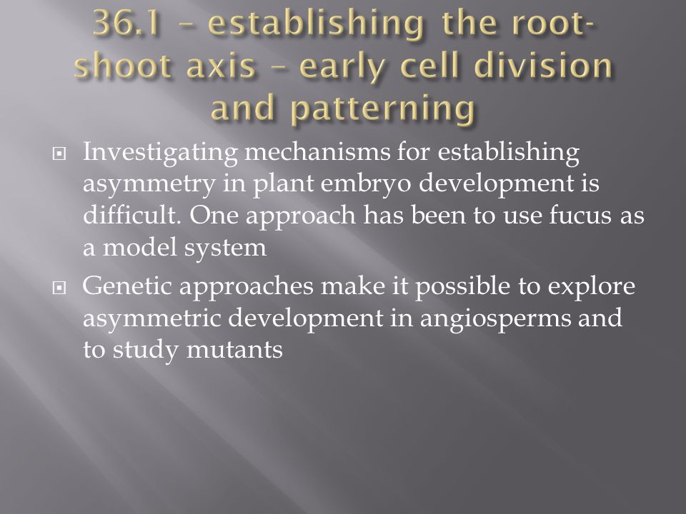 36.1 – establishing the root-shoot axis – early cell division and patterning