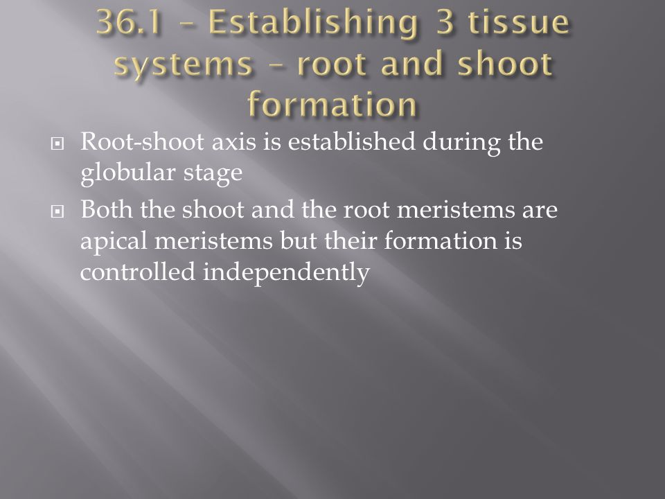 36.1 – Establishing 3 tissue systems – root and shoot formation