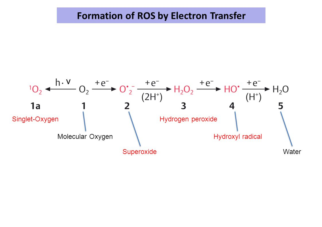 Formation of ROS by Electron Transfer