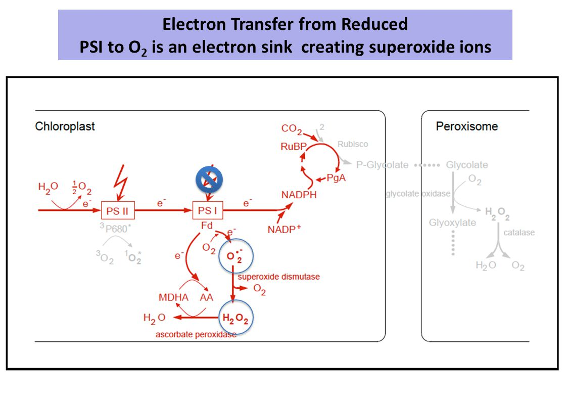 Electron Transfer from Reduced