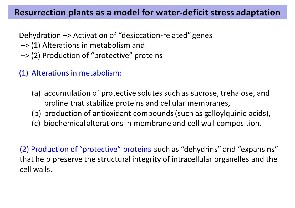 Resurrection plants as a model for water-deficit stress adaptation
