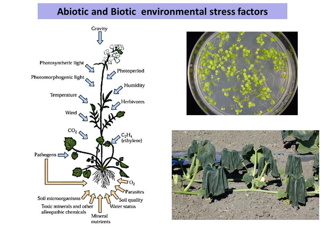 Abiotic and Biotic environmental stress factors