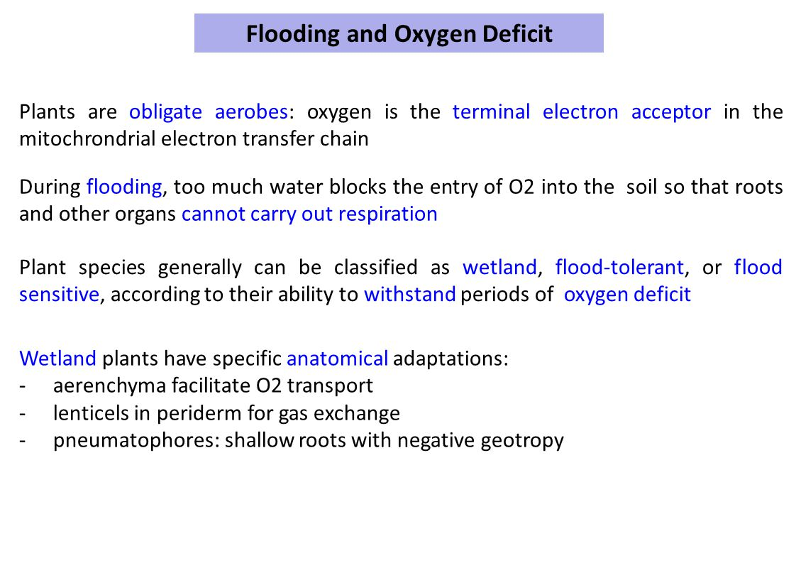 Flooding and Oxygen Deficit