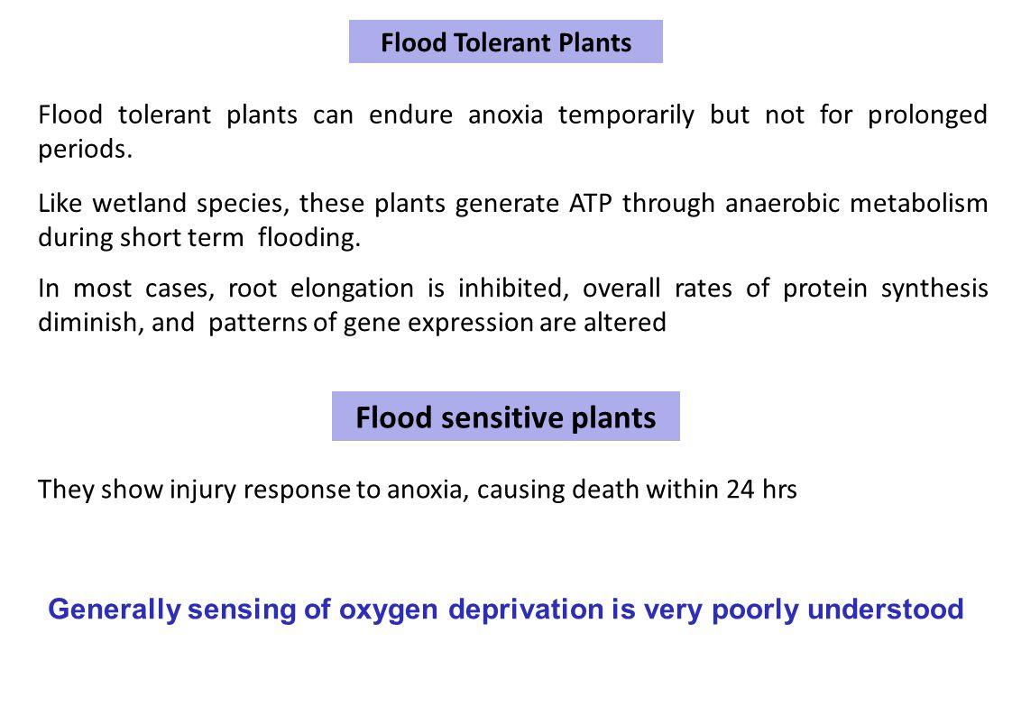 Flood sensitive plants