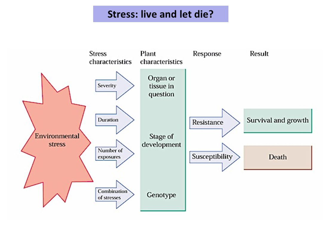 Stress: live and let die