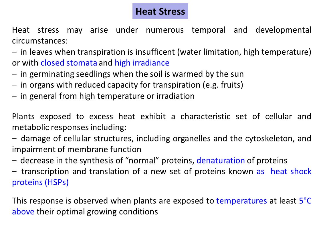 Heat Stress Heat stress may arise under numerous temporal and developmental circumstances: