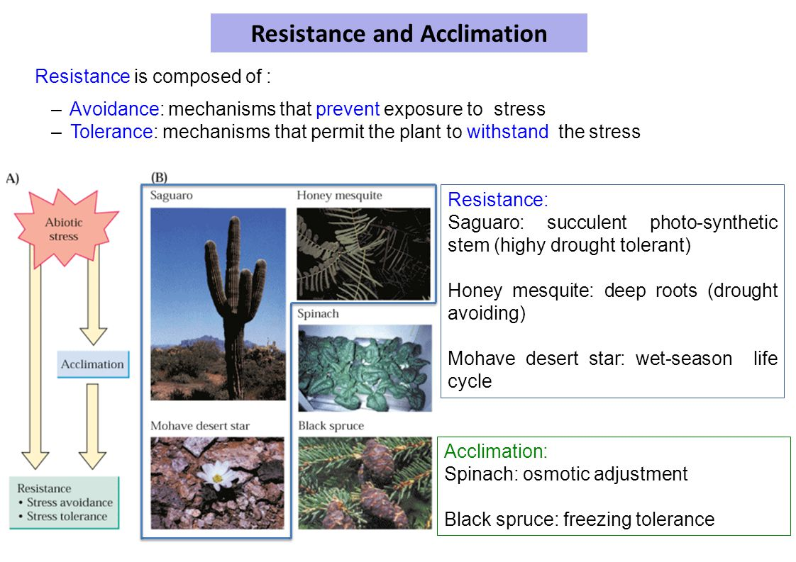 Resistance and Acclimation