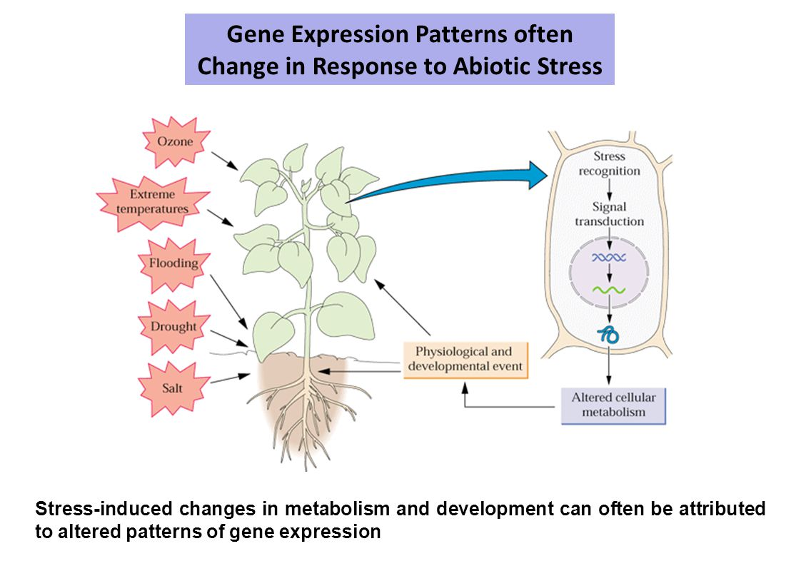 Gene Expression Patterns often Change in Response to Abiotic Stress