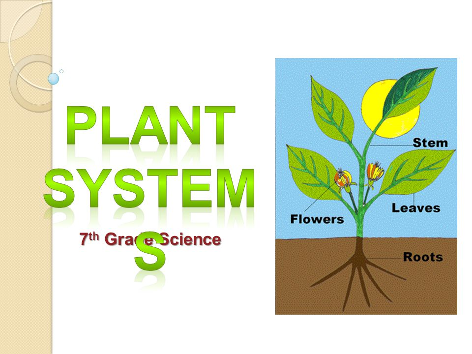 Plant Systems 7th Grade Science