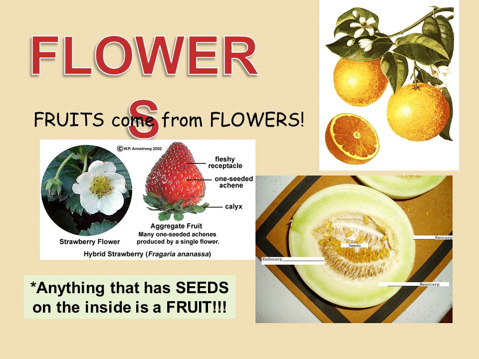*Anything that has SEEDS on the inside is a FRUIT!!!