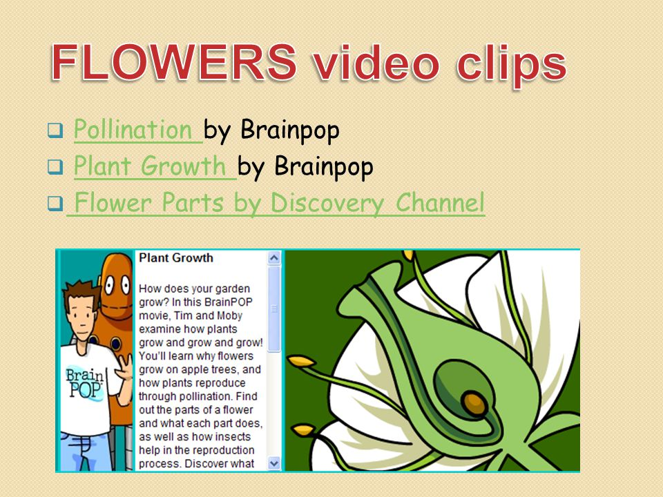 FLOWERS video clips Pollination by Brainpop Plant Growth by Brainpop