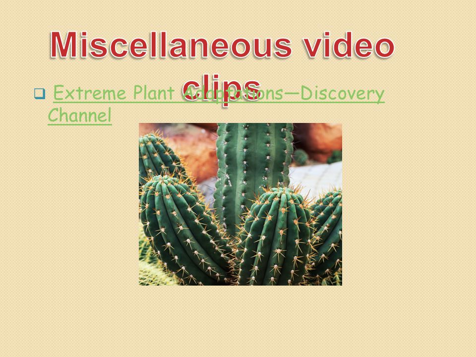 Miscellaneous video clips