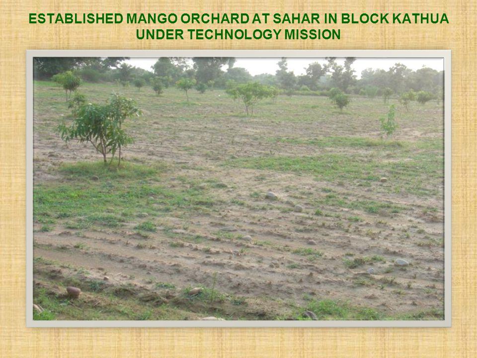 ESTABLISHED MANGO ORCHARD AT SAHAR IN BLOCK KATHUA UNDER TECHNOLOGY MISSION