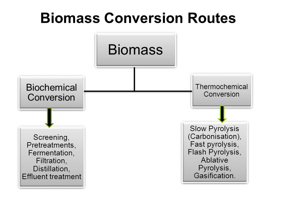 Biomass Conversion Routes
