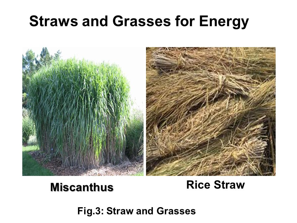 Straws and Grasses for Energy