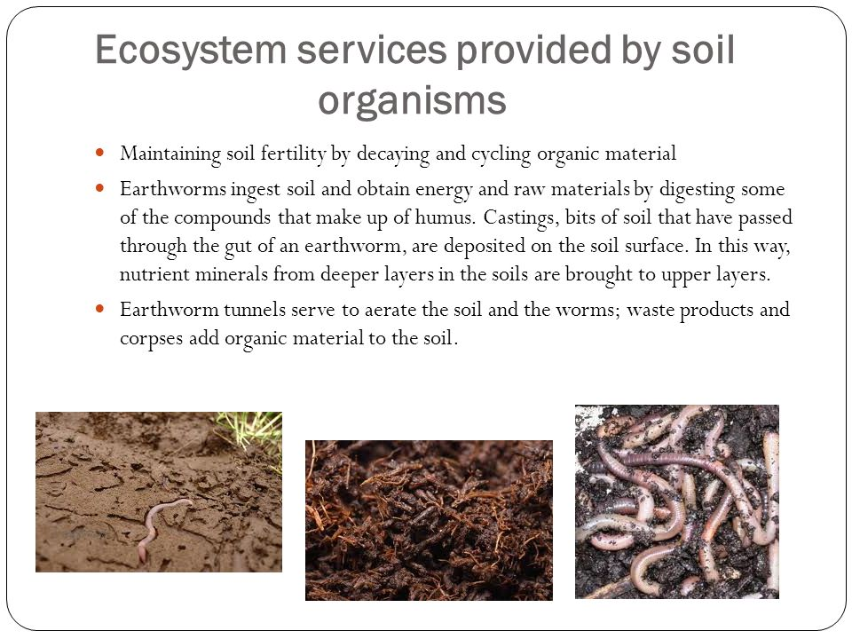 Ecosystem services provided by soil organisms
