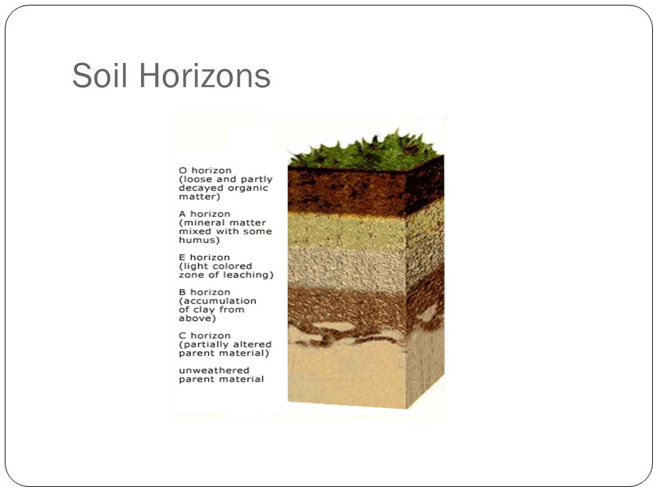 soil horizons related keywords soil horizons long tail