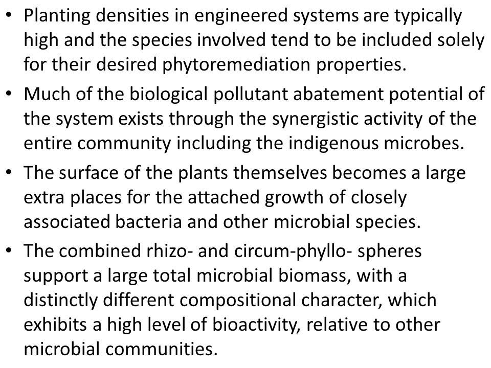 Planting densities in engineered systems are typically high and the species involved tend to be included solely for their desired phytoremediation properties.