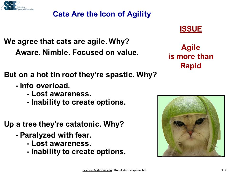 Cats Are the Icon of Agility