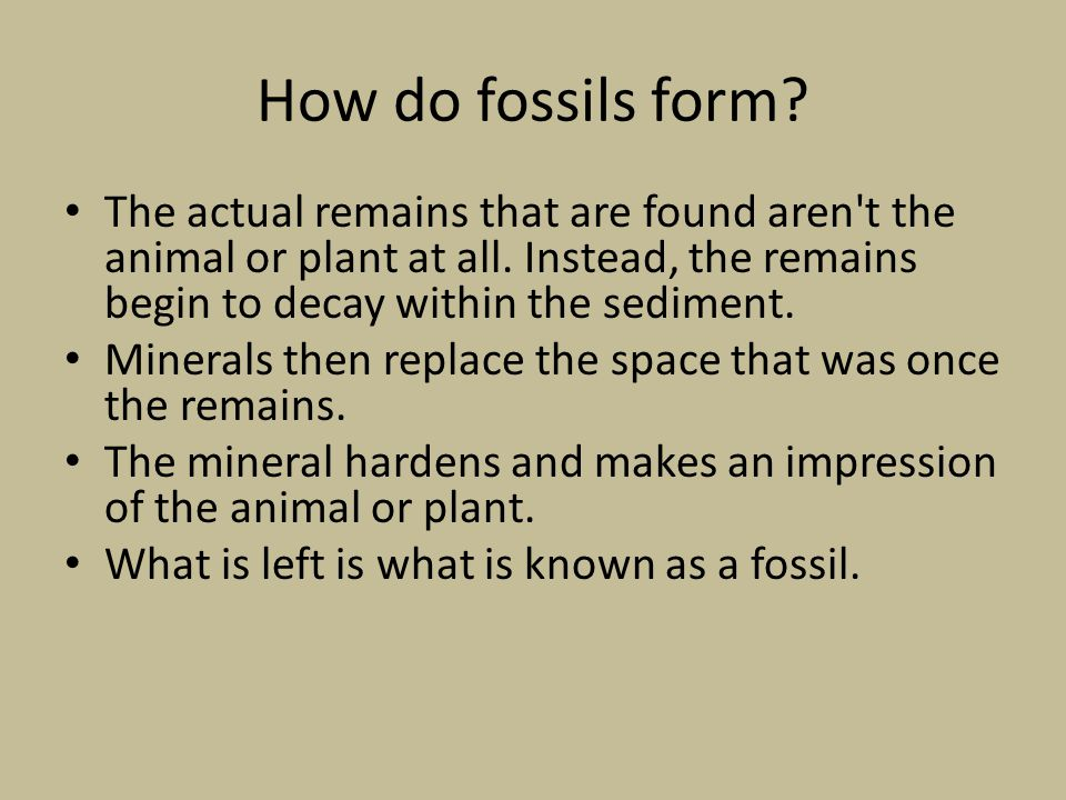 How do fossils form The actual remains that are found aren t the animal or plant at all. Instead, the remains begin to decay within the sediment.