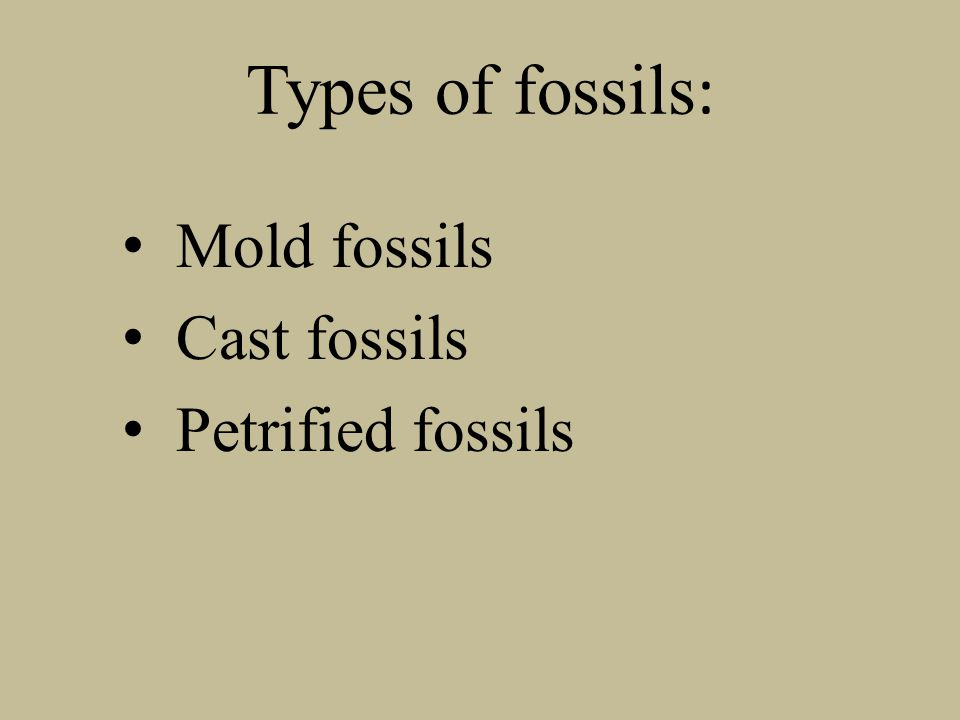 Types of fossils: Mold fossils Cast fossils Petrified fossils