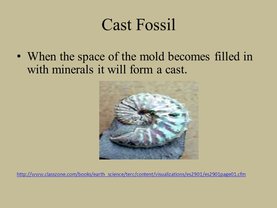 Cast Fossil When the space of the mold becomes filled in with minerals it will form a cast.