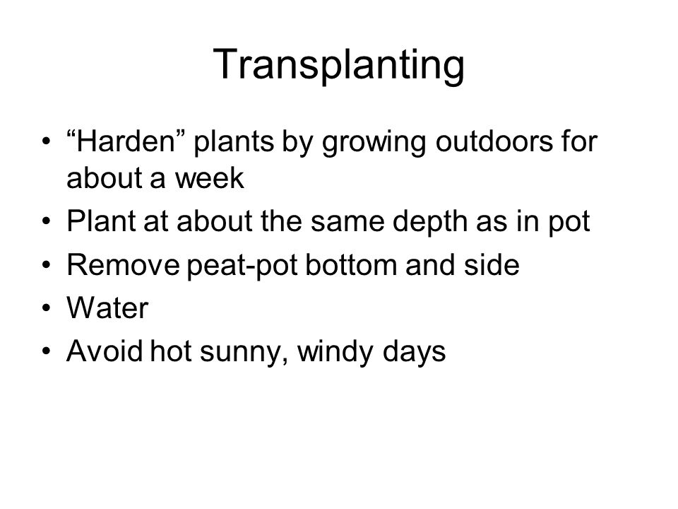Transplanting Harden plants by growing outdoors for about a week