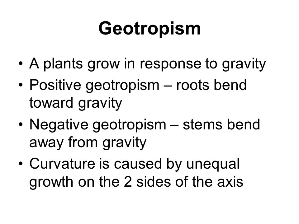 Geotropism A plants grow in response to gravity