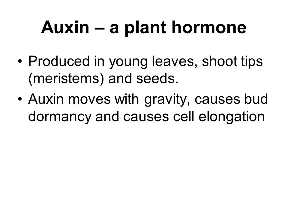 Auxin – a plant hormone Produced in young leaves, shoot tips (meristems) and seeds.