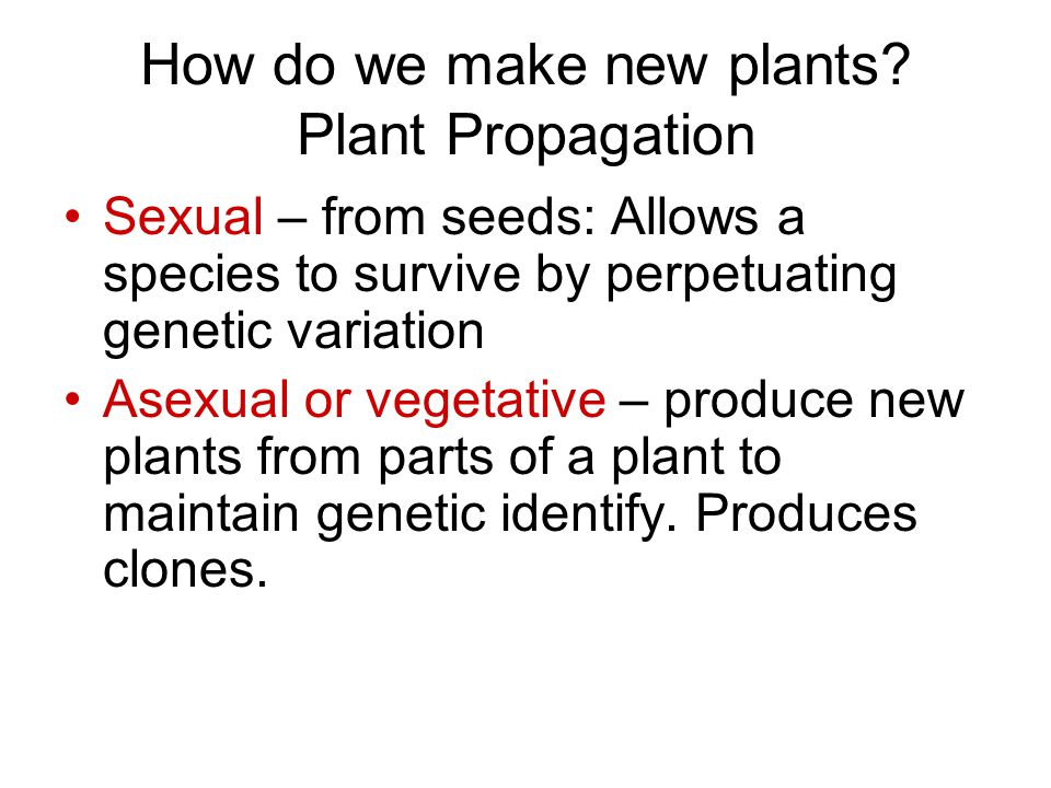 How do we make new plants Plant Propagation
