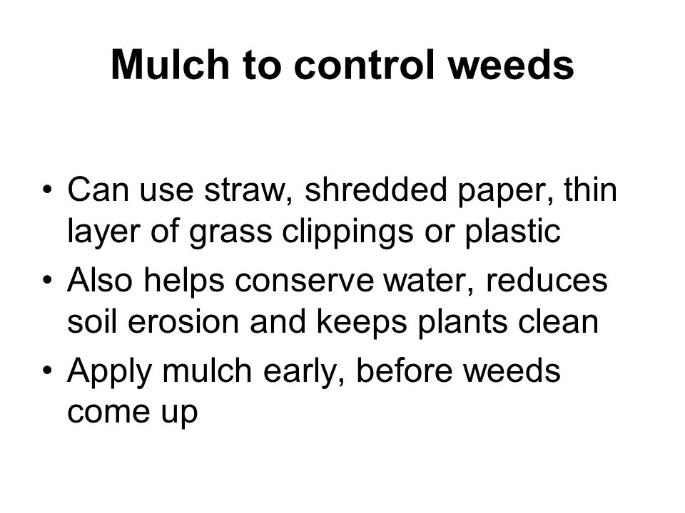Mulch to control weeds Can use straw, shredded paper, thin layer of grass clippings or plastic.