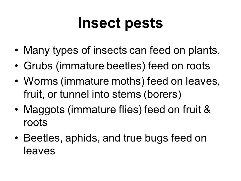 Insect pests Many types of insects can feed on plants.